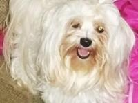 Bella is a 2 year old female Morkie. She is playful and