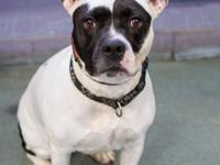 Name: Bella Age: 5 years old Friendly with dogs:
