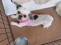 Bella's story I came into the county shelter with