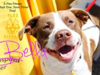 Bella is a big friendly girl rescued when her owner