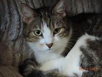 Bella (tabby)'s story You can fill out an adoption