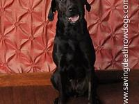 My story Hi Im Bella! A playful 1 yr old Lab. I love