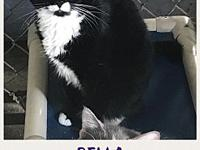 Bella's story Meet Bella! Bella was surrendered to the