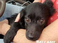 Bellamy's story For a pup that was abused and kicked by