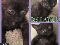 Bellatrix's story Bellatrix has the sweetest little