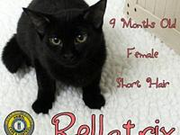 Bellatrix's story You can fill out an adoption