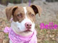 Belle's story This adorable southern lass is ready to
