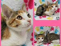 Belle's story Our adoption fee covers felv/fiv testing,