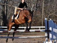 If you are looking for a phenomenal mare with great