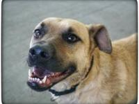 Belle's story Meet Belle! Belle is here at Paws and