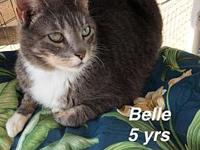 Belle's story Our pets are spayed/neutered and current