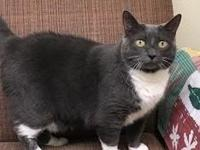 Belle is a shy but playful girl. She is sweet-natured,