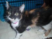 Belle was rescued as a kitten with her sister Mia from