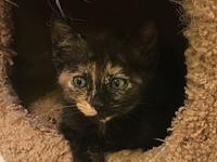 Belle's story I am a kitten and MAY require another