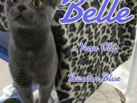 Belle's story You can fill out an adoption application
