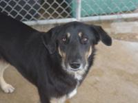 Come visit our shelter.   Belle's estimated birthdate
