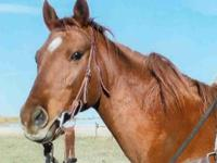 Belle is a 21 year old registered thoroughbred who was
