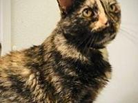 My story Belle female 6 year old TortieThe Domestic
