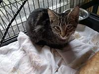 Ben's story This poor kitty was found abandoned. He is