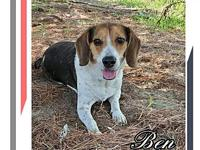 My story This is Ben the Beagle. His paperwork said