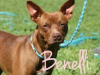 Benelli is the cutest little thing! We rescued her from