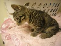 We have two half bengal kittens available, both males.