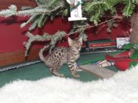 We have both male and female bengal kittens available