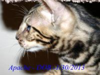 This beautiful little marble boy - Apache - Is ready to