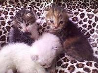 We have 5 very adorable kittens, 1/2 Bengal 1/2