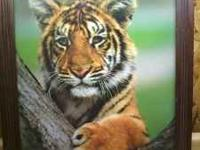 Bengal tiger cub picture and frame ,very cute ! mike