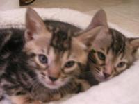Description:. WE HAVE NEW BABIES marbles with FIVE