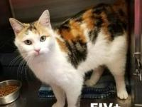 Benita's story Benita is a gorgeous young calico with