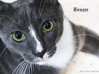 Benjee's story All of our pets are spay/neut, up to