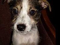 Benji's story Hi my name is Benji! I'm being fostered