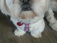 Hi! I'm Benji. I'm a 19#, shihtzu and I'm 5 yrs old.