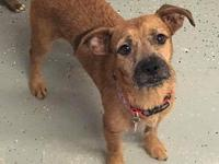 Benji's story Benji is a 1 year old Carin Terrier mix!