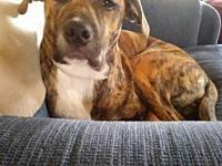 Benni's story You can fill out an adoption application