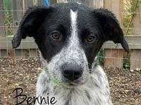 Bennie's story If you are not viewing this adoption