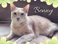 Benny, like his coat, is one honey of a cat!
