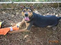 Benny's story Adopt me....Hi my name is Benny. I'm a 6
