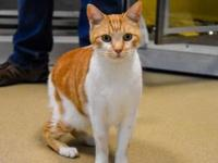 Bentley's story My name is Kevin I am a neutered male