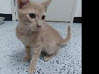 Bentley's story Litter trained, meows when left alone,