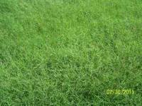 2011 - Alicia Bermuda & Coastal Bermuda Hay Irrigated,