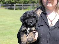 We have Bernedoodles now ready to go..We have most all