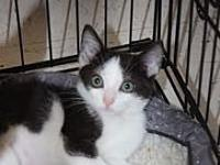 Bernice's story Super sweet kitten Bernice is accepting