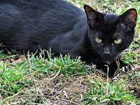 Berry's story Berry is a female black cat, born on