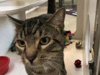 Bert's story Bert was found on West Locust Street with