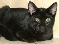 Berta is approx. 5 year old sweet and beautiful black