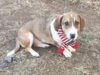 Bess T.'s story Basset Hound mix Bess was born January
