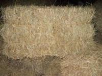 50 bale truck load of 4X4 Round Bales of Orchard